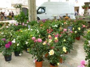 Fleurs 2013.1