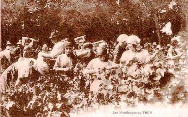 Le Thor- Vendangeuses ca 1920